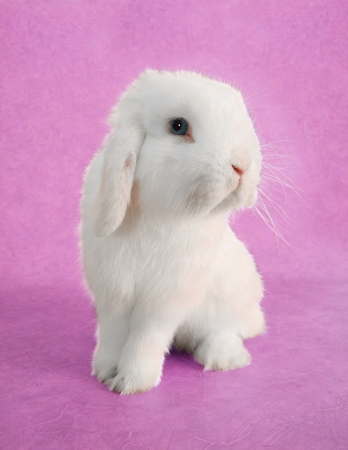 White Easter bunny rabbit portrait  Stock Photo - 18138145