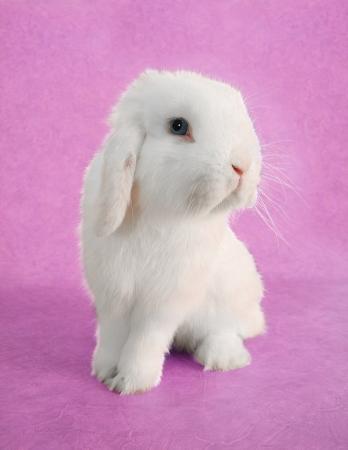 White Easter bunny rabbit portrait Stock Photo - 18138145