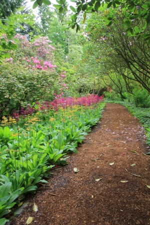 primula: Beautiful woodland garden path in springtime  also available in horizontal