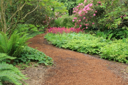primula: Beautiful woodland garden path in springtime  Also available in vertical