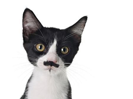 Cute black and white kitten with a mustache Stock Photo - 18138144