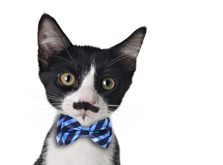 Cute black and white kitten with moustache and bow tie