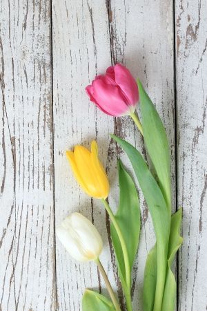 Three tulips on a vintage wooden background   Stock Photo - 18653187