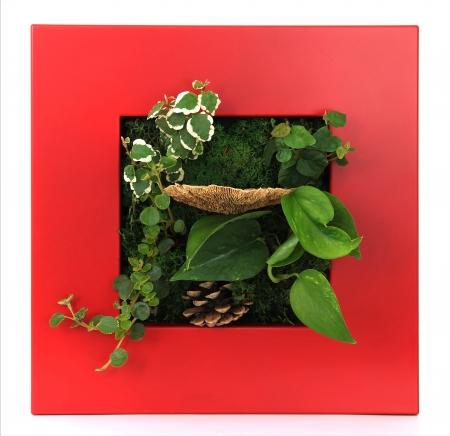 Contemporary moss wall planter Stock Photo - 18874896