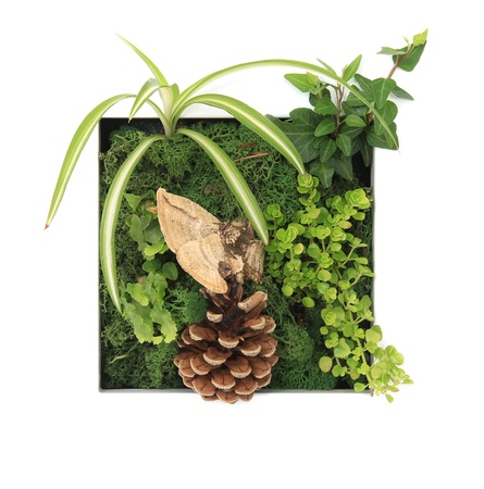 Contemporary moss wall planter  Stock Photo - 18869791