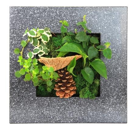 Contemporary moss wall planter Stock Photo - 18874897