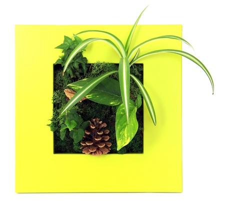 Contemporary moss wall planter Stock Photo - 18874898