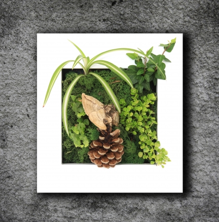 Contemporary moss wall planter Stock Photo - 19138909