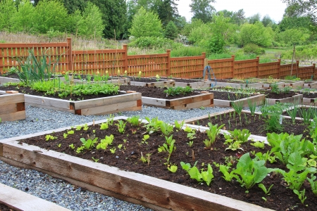 plots: Community vegetable garden boxes