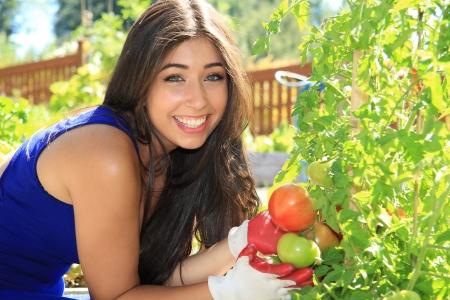 トマト植物と野菜の庭で美しい若い女性