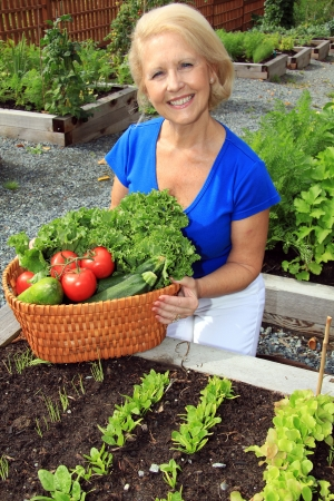 Senior woman with a basket of fresh vegetables Stock Photo - 21863937