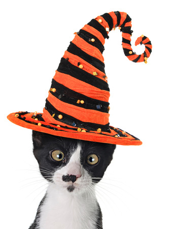 halloween witch: Cross eyed kitten wearing a Halloween witch hat