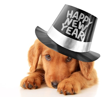 Shy puppy wearing a Happy New Year top hat  Stock Photo