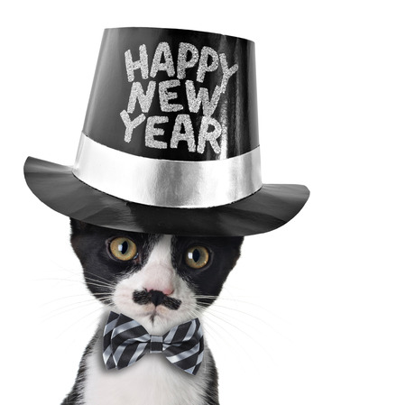 hat new year s eve: Cute black and white kitten with moustache, bow tie and Happy New Year hat