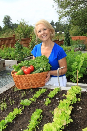 Retired woman in the vegetable garden holding a basket of freshly picked lettuce and tomatoes  Also available in horizontal   photo