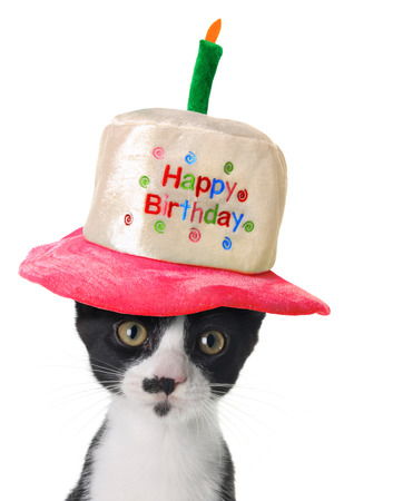 Kitten wearing a Happy Birthday hat   photo