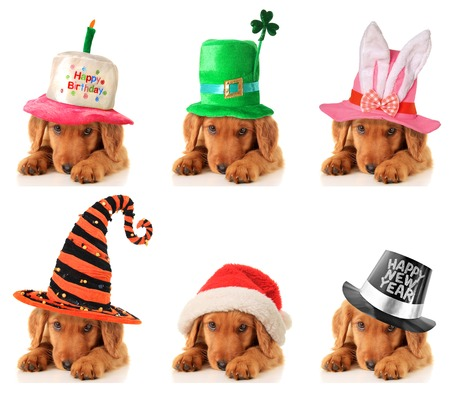 hat new year s eve: A puppy for every occasion  Birthday, St Patrick