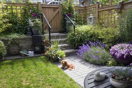 Kleine patio tuin met een teckel hond liggend in de zon. Stockfoto