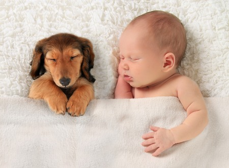 newborn baby: Newborn baby and a dachshund puppy sleeping together.