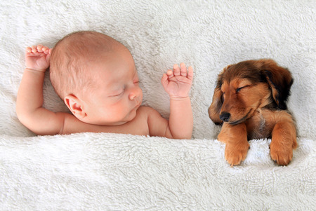 room for text: Newborn baby and a dachshund puppy sleeping together.