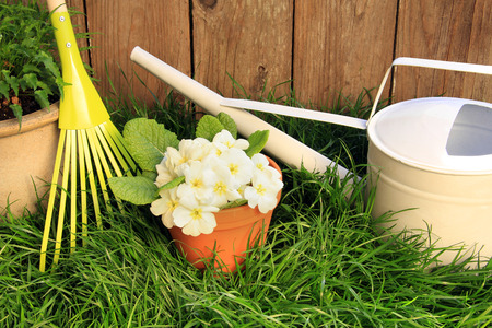 Garden rake, primrose flowers in a clay pot and a watering can against grass and a wooden fence. photo