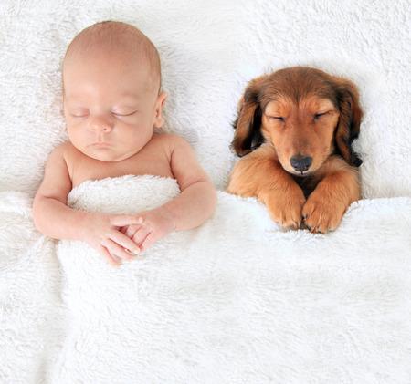 Sleeping newborn baby alongside a dachshund puppy. 写真素材