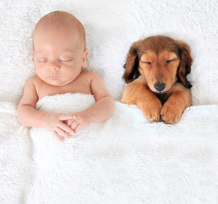 Sleeping newborn baby alongside a dachshund puppy. Stock Photo