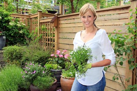 verano: Sonriendo de cincuenta a�os jardinero dama en el jard�n que sostiene un paquete de lobelia.
