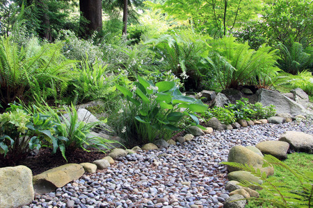garden: Woodland shade garden path lined with Hosta and fern. Stock Photo