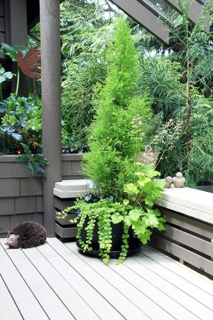 patio deck: Cypress fioriera su un patio ponte di legno esterno. Archivio Fotografico