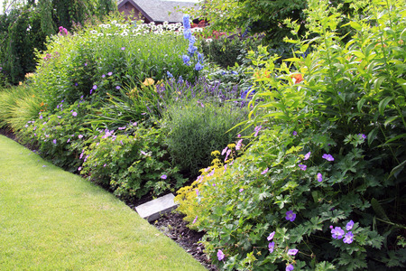Perennial flower bed in summer. Stock fotó