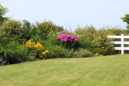 Summer garden lawn with perennial border in bloom.