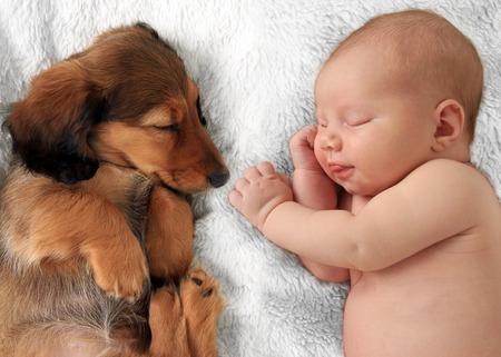 Newborn baby girl  and dachshund puppy asleep on a white blanket.