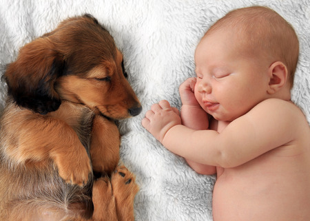 buddies: Newborn baby girl  and dachshund puppy asleep on a white blanket.