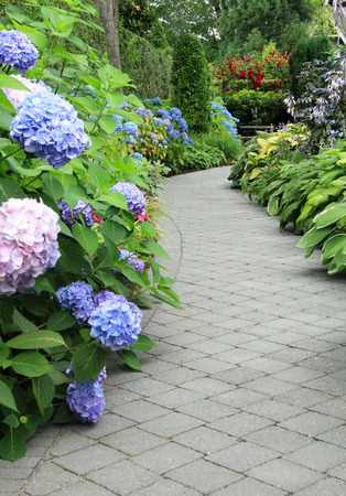 Beautiful shaded garden path lined with hydrangea and hosta.