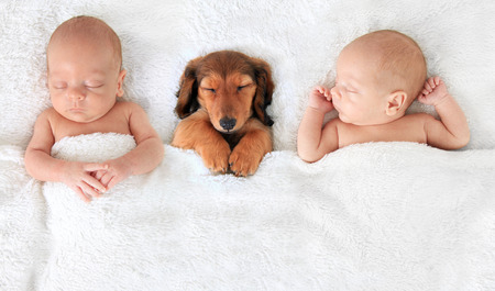 infants: two Sleeping newborn babies with a dachshund puppy.