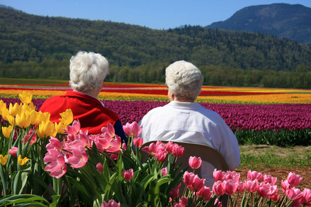 view to outside: Two senior ladies seated outside, enjoying the view of the tulip fields.