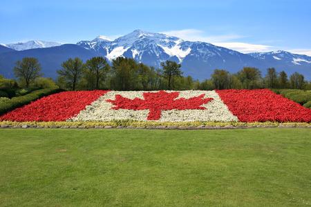 bandera blanca: Bandera de Canadá hizo en begonia de flor roja y blanca contra un telón de fondo de las montañas Rocosas.