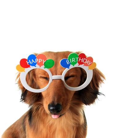 Grappige Gelukkige Verjaardag teckel puppy met gesloten ogen en tong uitsteekt.