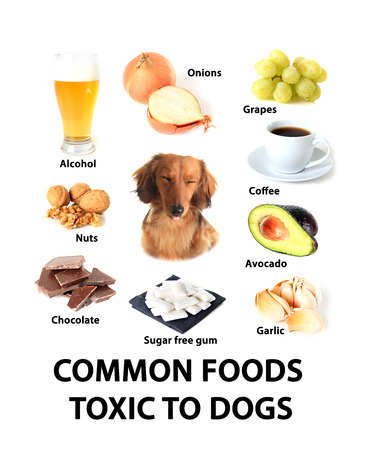Chart of toxic foods for dogs.