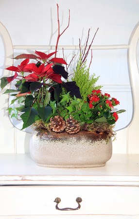 arrangements: Indoor Floral arrangement for Christmas.