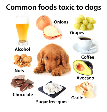 Chart of toxic foods for dogs. Also available without text.