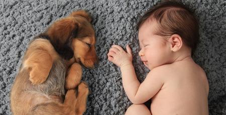 naptime: Newborn baby girl sleeping next to a dachshund puppy