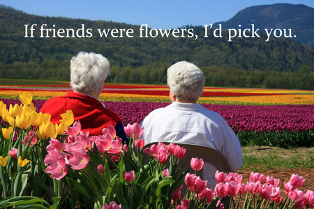 view to outside: Two senior ladies seated outside, enjoying the view of the tulip fields. Also available without quotes.