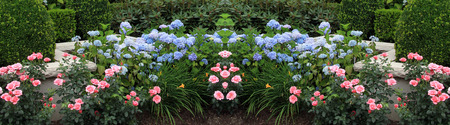 Summer flower bed with roses and hydrangeas. This image is seamless and can be used to create an endless border.