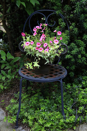 patio chair: Petunia planter on a rustic patio chair. Stock Photo
