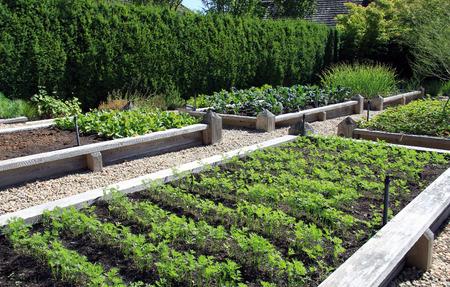 Neatly organized raised vegetable garden. Imagens