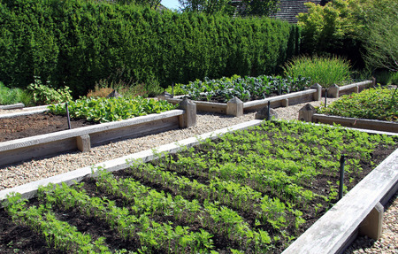neatly: Neatly organized raised vegetable garden. Stock Photo