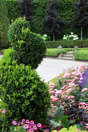 boxwood: Beautiful park garden in summer with manicured boxwood and geraniums.