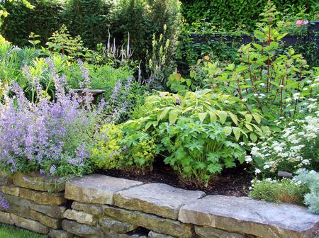 flower bed: Perennial flower bed in summer.